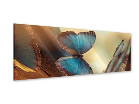 Panoramic Acrylic Print Butterflies