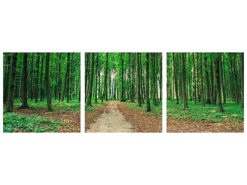 Panoramic 3 Piece Acrylic Print Pine Forests