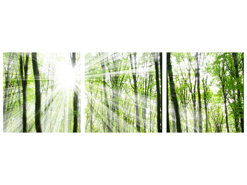 Panoramic 3 Piece Acrylic Print Magic Light In The Trees