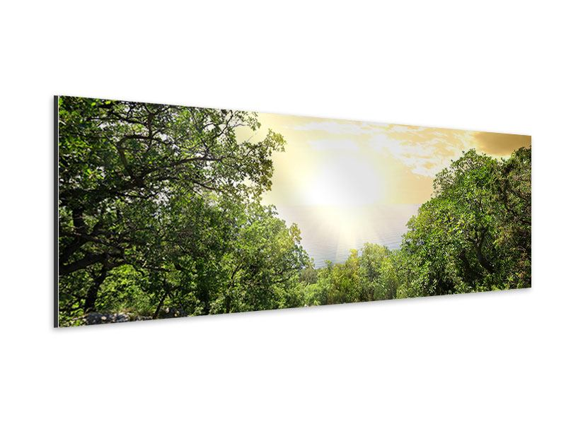 Panoramic Aluminium Print At The End Of The forest