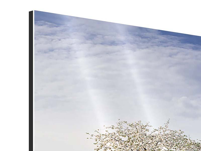 Panoramic 3 Piece Aluminium Print Apple Tree Garden