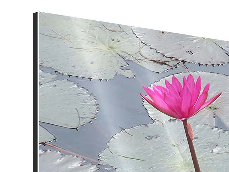 Modern 3 Piece Aluminium Print Jump In The Lily Pond