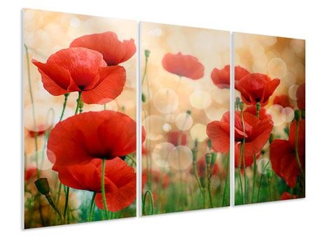 3 Piece Forex Print The Poppy