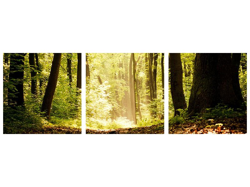 Panoramic 3 Piece Forex Print Sunrise In The Forest