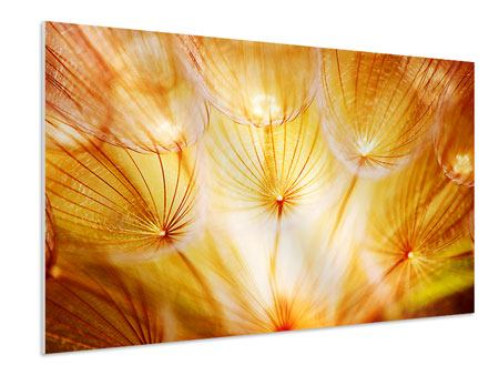 Forex Print Close Up Dandelion In Light