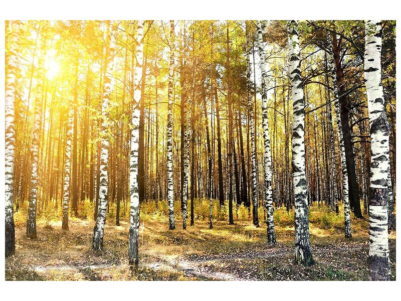 Self-Adhesive Poster Birch Forest