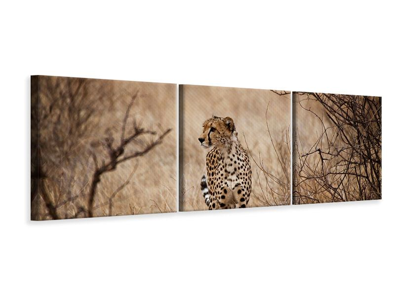 Panoramic 3 Piece Canvas Print Elegant Cheetah