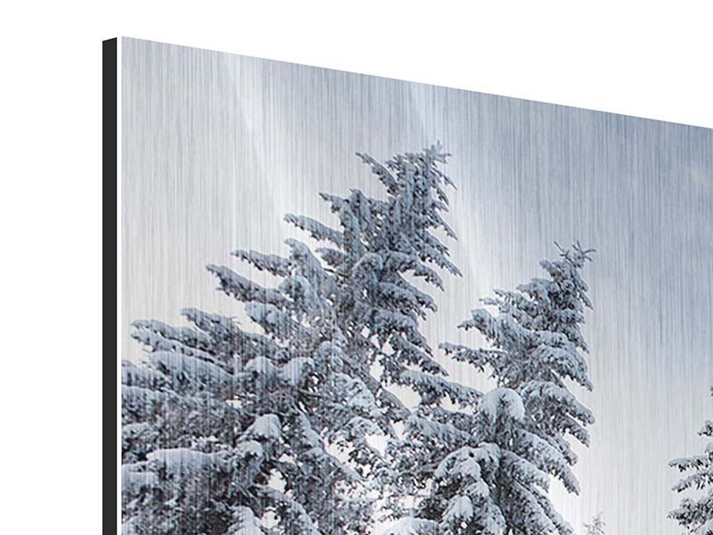 Panoramic Metallic Print Winter Firs
