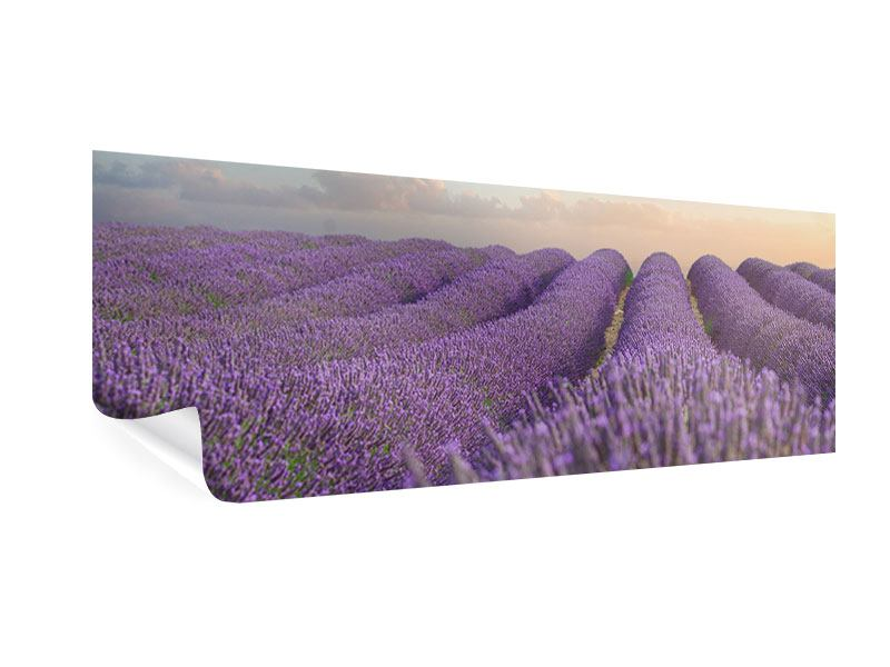 Panoramic Poster The Blooming Lavender Field