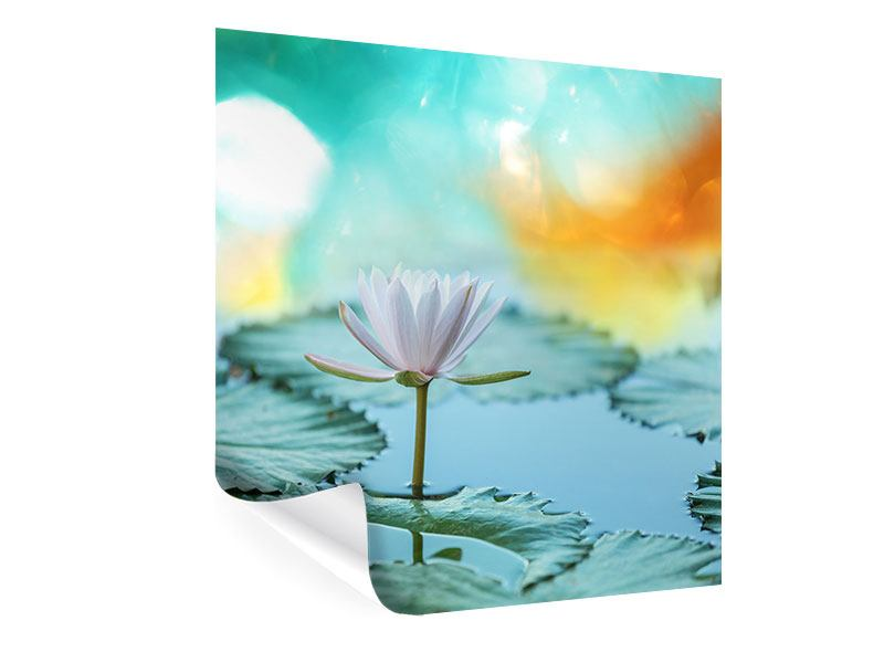 Poster Dreamy Lotus