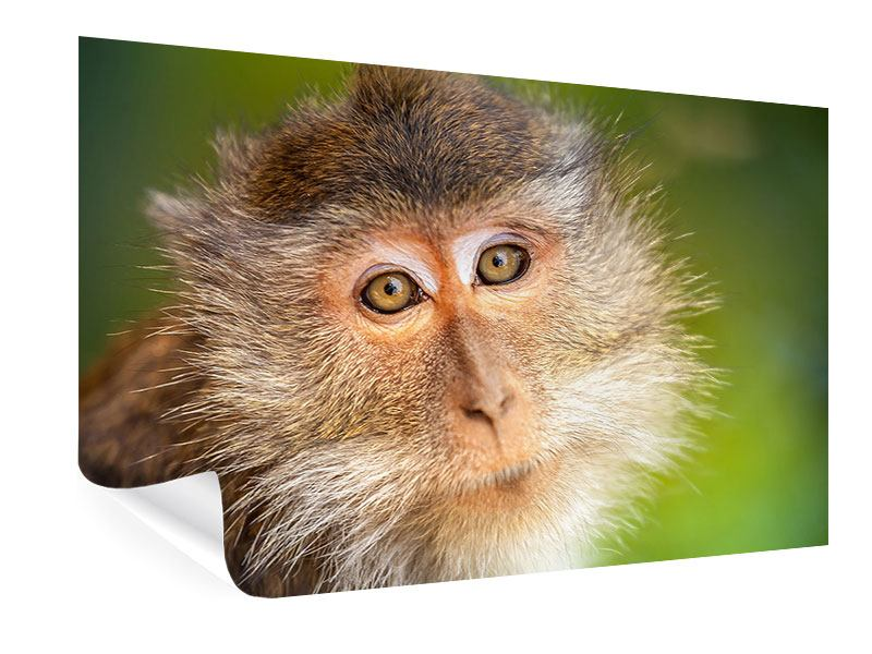 Poster The Macaque