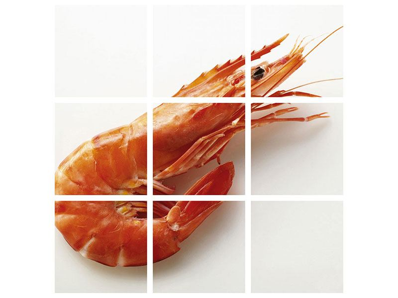 9 Piece Poster The Tiger Shrimp