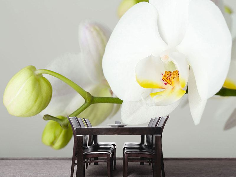Photo Wallpaper Giant Orchid
